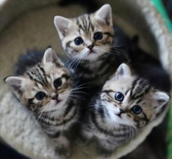 ea574f7b0c67a83a4d898c8566e346d4--adorable-kittens-cute-cats